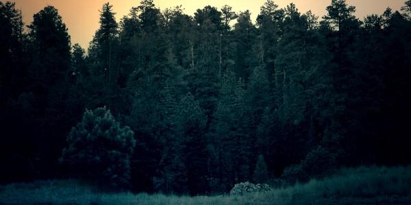 Κυκλική Διαδρομή στο Παρθένο Δάσος Ροδόπης